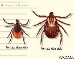 251_Lyme_Tick2